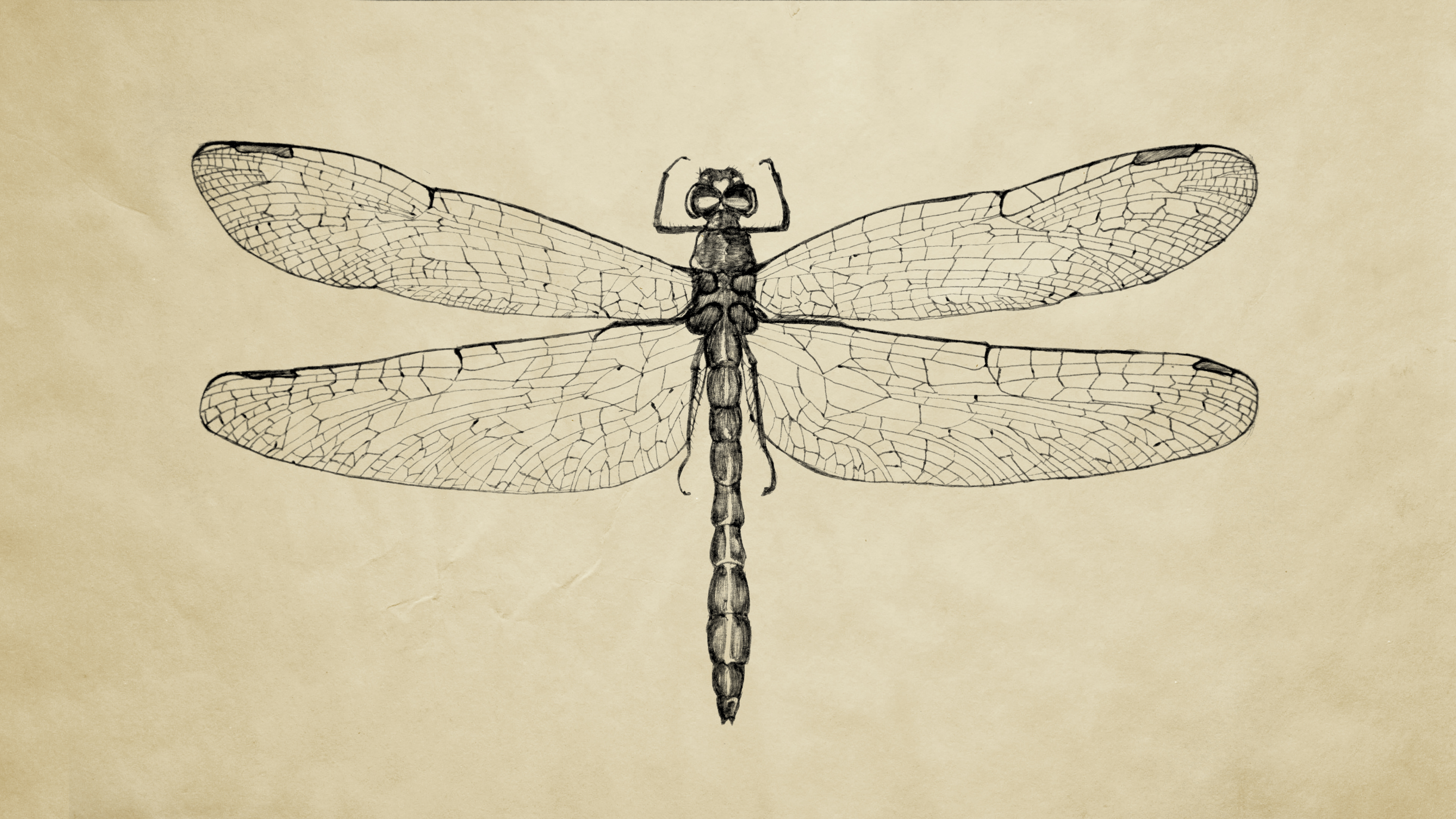 Kawika Sweeney - Insects: an illustrative study