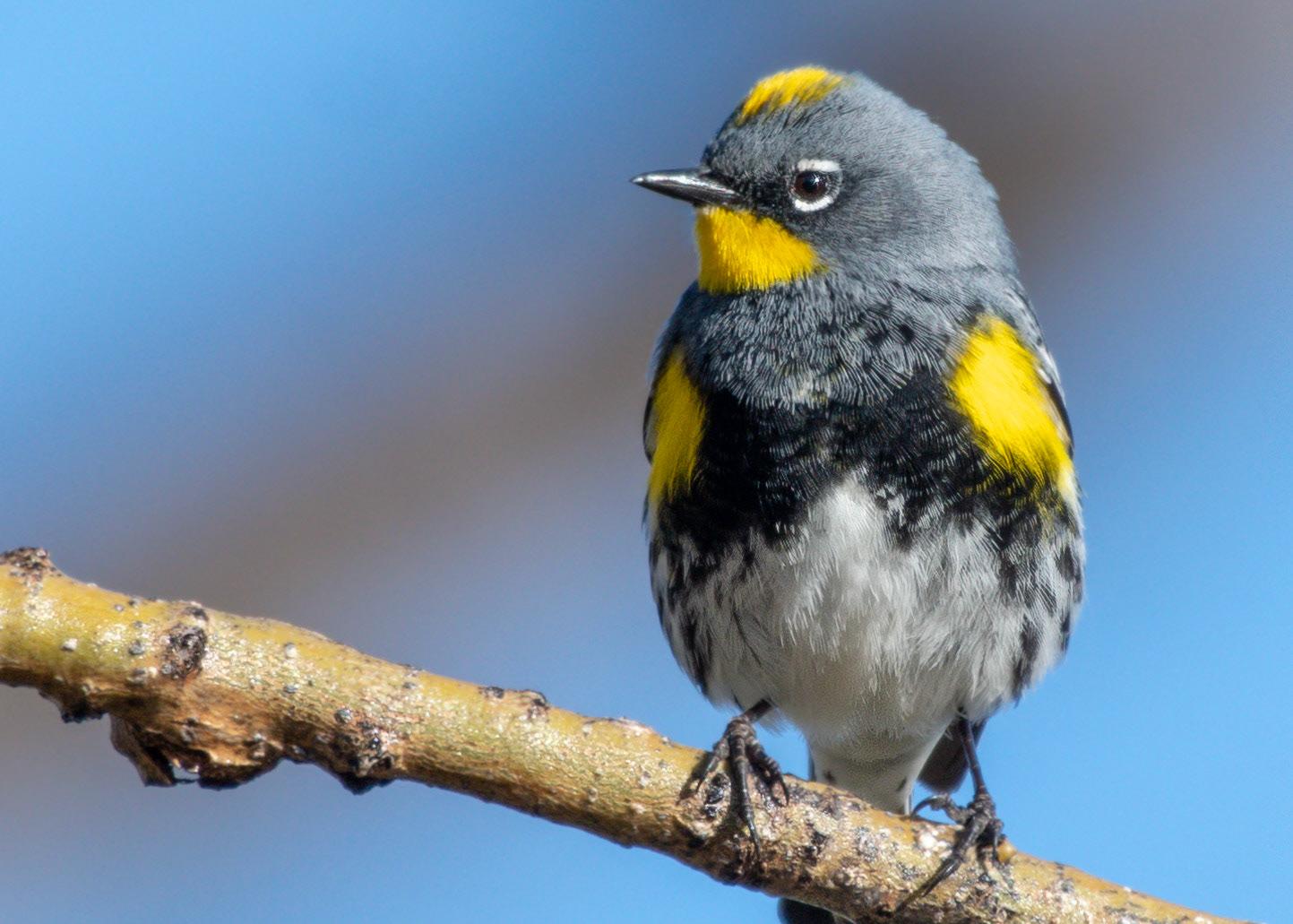 Wendi Fisher - Colorado Birds
