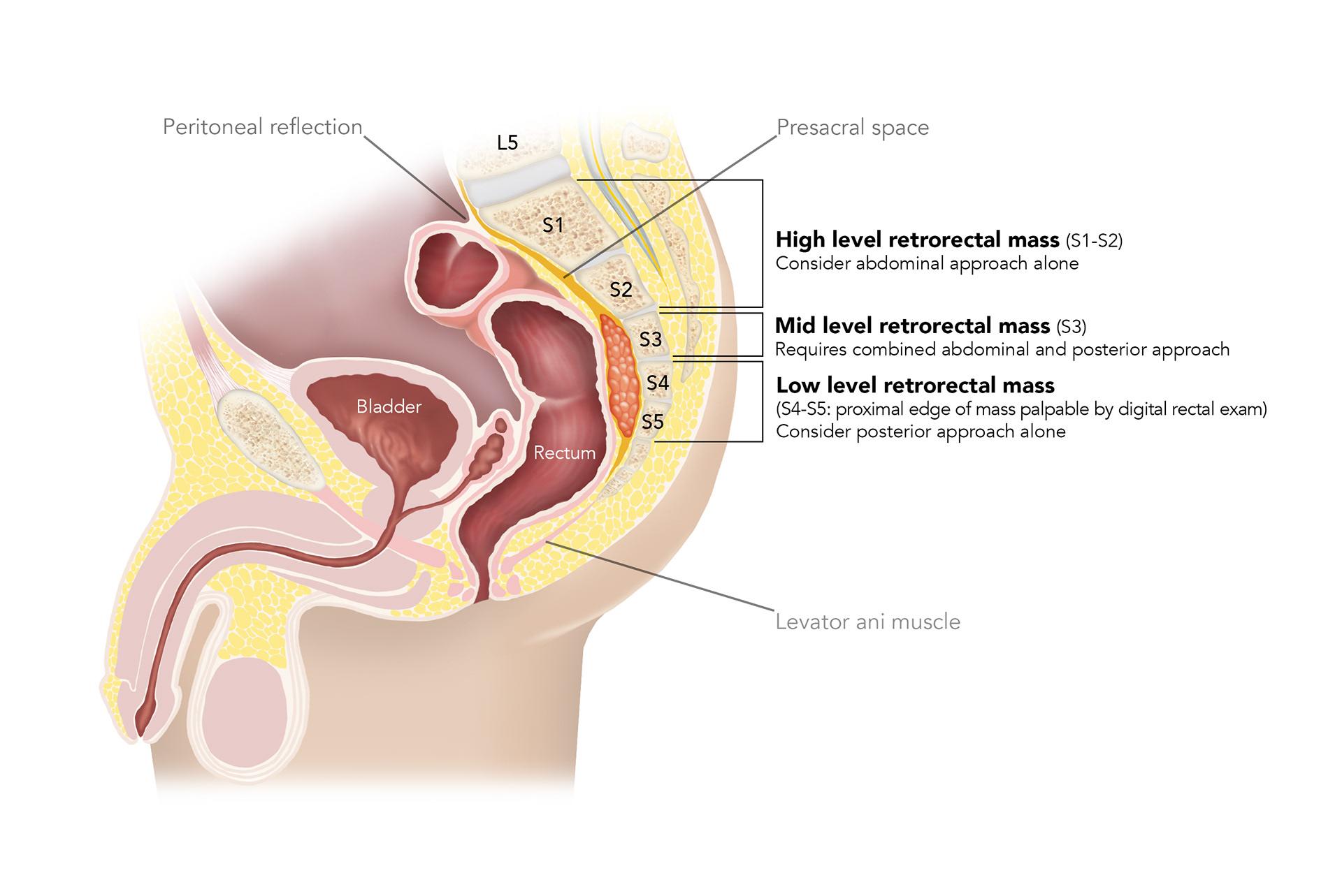 yuko tonohira - Medical illustration (academic)