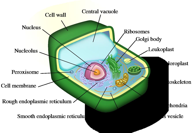 Introduction to Cnidaria