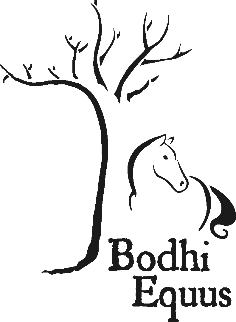 Bodhi Equus: Equine Training by Shelbie Fredenhagen