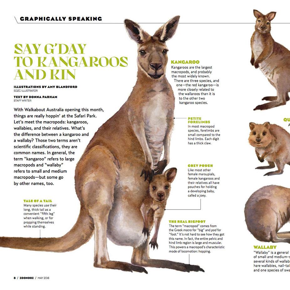 low priced 05776 e7d99 Amy Blandford - Kangaroos & Kin