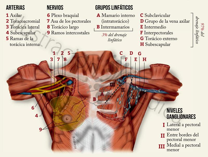 Manuel Romera, medical illustrator - Cáncer de Mama - Infografías