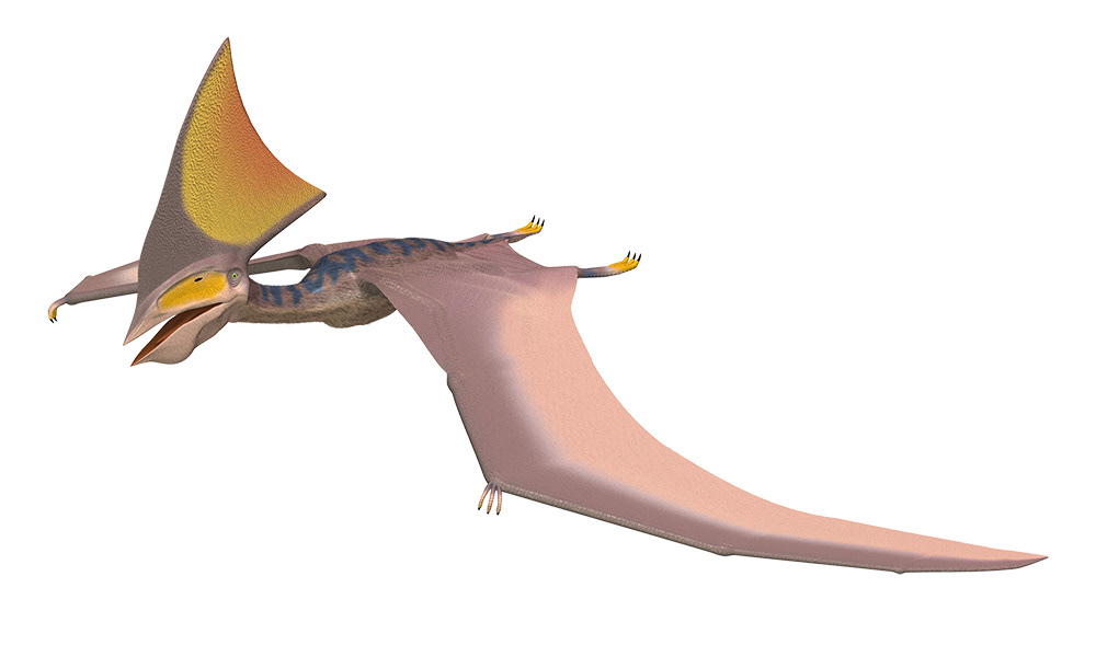 恐竜/DINOSAUR/白亜紀前期